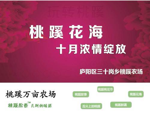 网站制作案例:合肥桃蹊现代农业开发有限公司-奇迪科技(深圳)有限公司